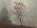 Herbstbaum im Nebel